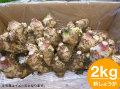 「土佐の大地のそのまんま土付き新大生姜(しょうが)」約2.0kg