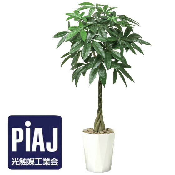 人工観葉植物 バキラ1.25