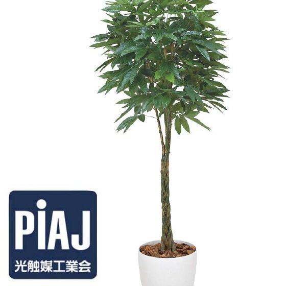 人工観葉植物 バキラ1.6