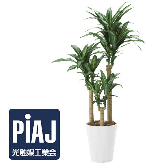 人工観葉植物 幸福の木1.6