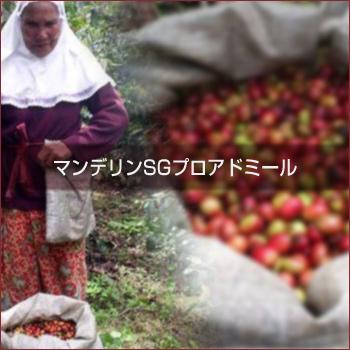 [ 受注後焙煎 ] マンデリンSG プロアドミール (100g)  【ゆうパケット可】