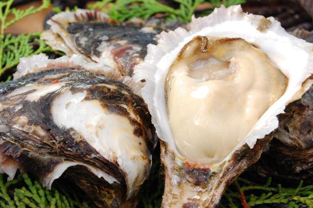 今が旬! 岩牡蠣 10個 (100g~130g/1個) | 送料別