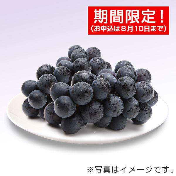 巨峰 約1.2kg 期間限定 青果市場厳選 九州産