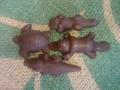 プロ動物造形作家オリジナル豆チョコ(ミルクチョコ)4種入