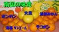 文旦はじめポンカンや温州みかん、せとか清美タンゴール等など、南国の柑橘5種セット