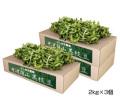 黒枝豆2束×3箱