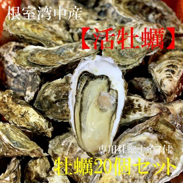 北海道根室湾中産 活カキ Mサイズ 20個セット(カキ専用ナイフ付)