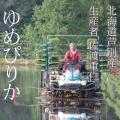 【元年産】単品 佐渡さんのゆめぴりか 10kg 北海道芦別市産