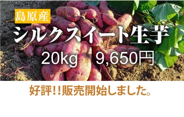 【シルクスイート】島原産 生芋 20kg クリームの様なさつま芋【送料無料】