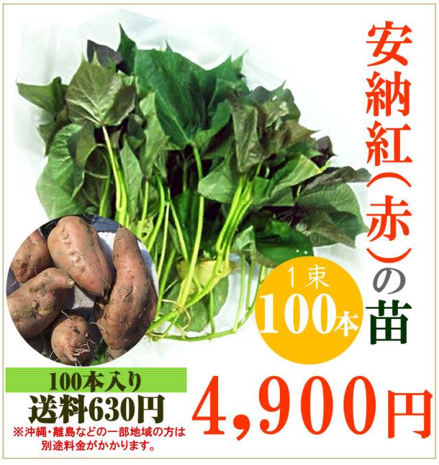 【予約】安納芋(赤)の切り苗 1束100本入【お届け日指定不可】