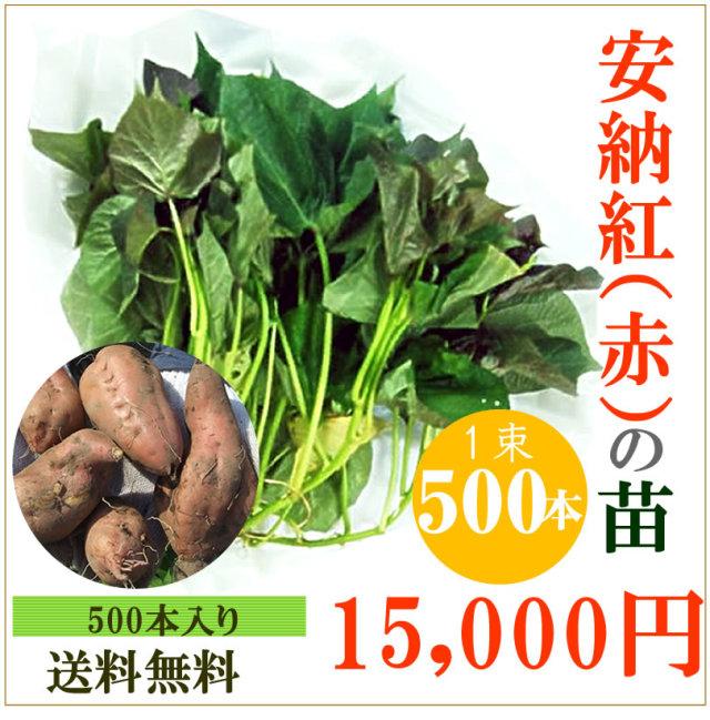 【予約】安納芋(赤)の切り苗 1束500本入【お届け日指定不可】