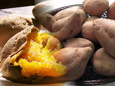 【今なら10%増量!】訳あり【安納芋】生芋 20kg 本場種子島産