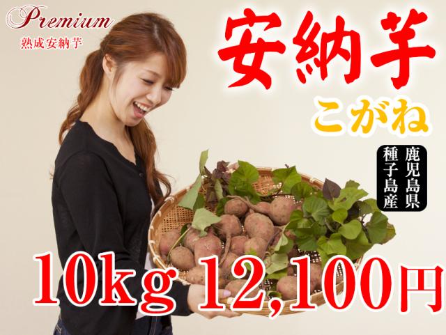 【安納こがね】生芋 10kg 本場種子島産