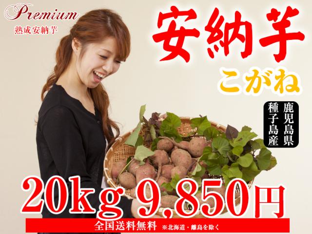 【安納こがね】生芋 20kg 本場種子島産