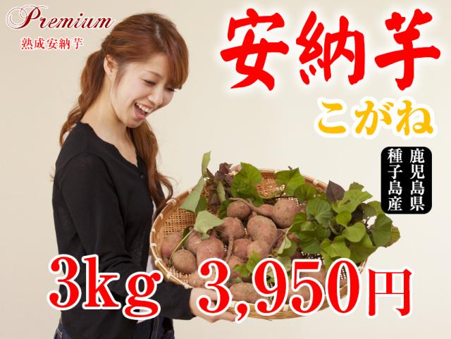 【安納こがね】生芋 3kg 本場種子島産
