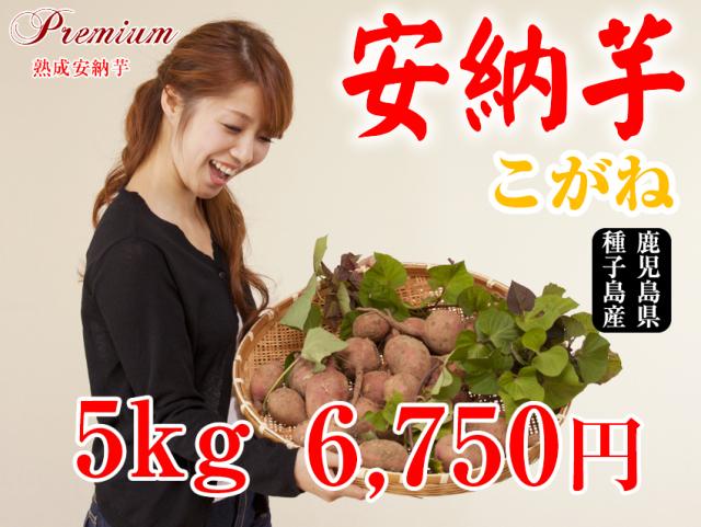 【安納こがね】生芋 5kg 本場種子島産