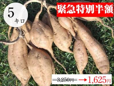 緊急特別半額!!【安納こがね】生芋 5kg 本場種子島産