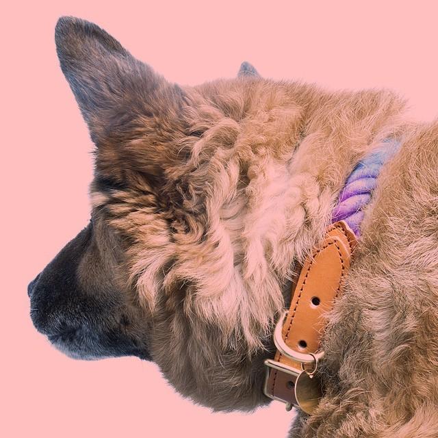 Found My Animal ファウンド・マイ・アニマル 首輪