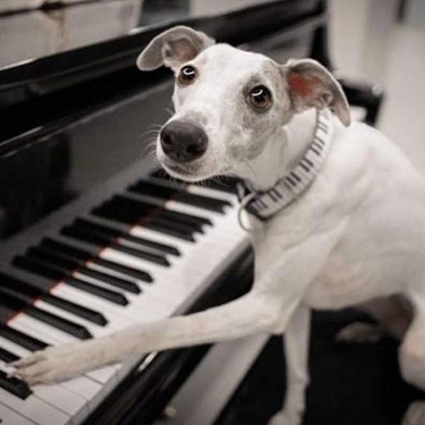 Max&Molly ピアノ